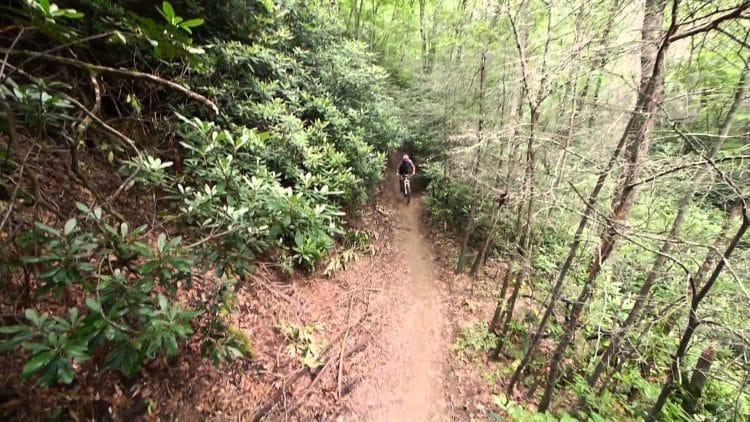 andar en bicicleta en el bosque-nacional-de-pisgah