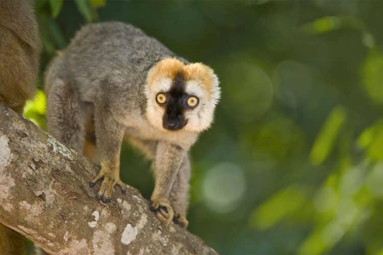 Madagascar Berenty