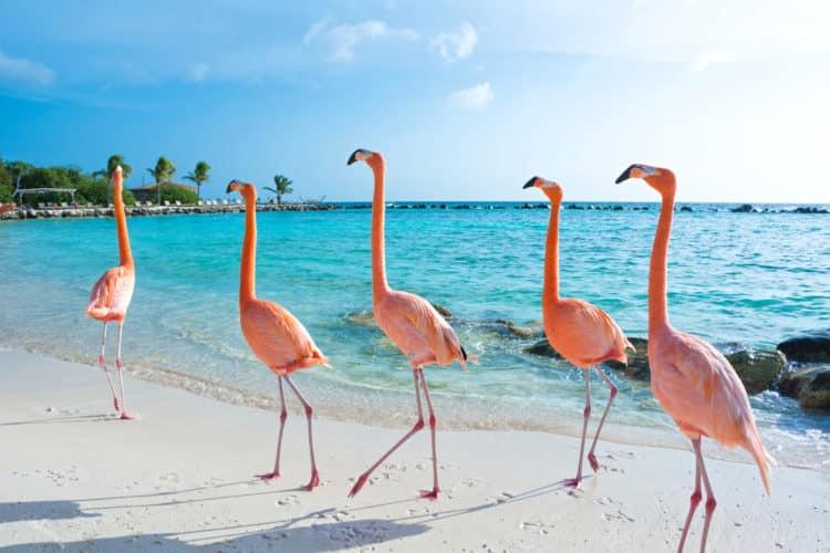 shutterstock 1008999640 scaled e1580759297753 Los 20 mejores lugares para vivir en el Caribe