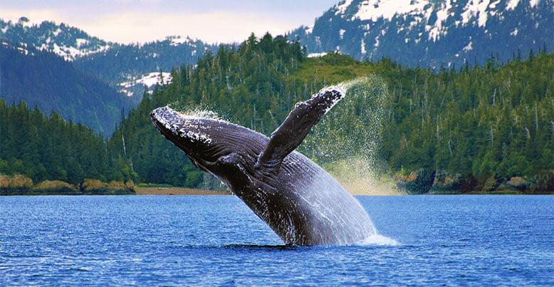 Alaska Las cinco mejores experiencias de lujo en Alaska