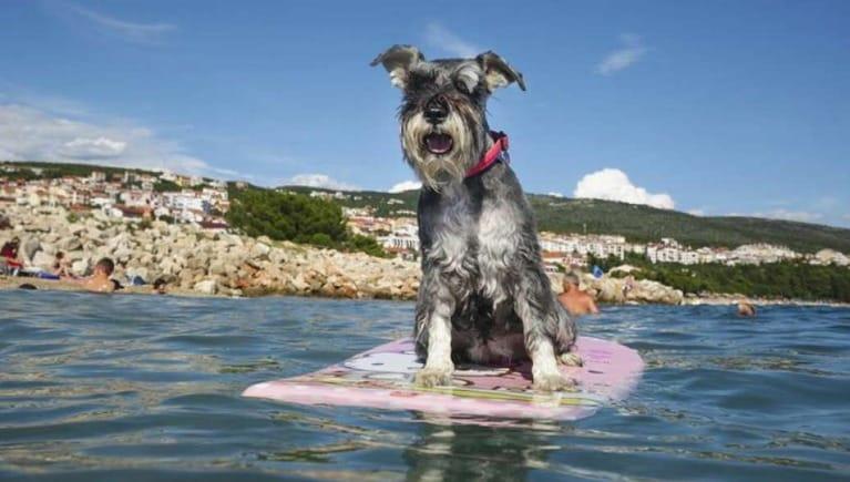 Cover Las 20 mejores playas para perros de Europa