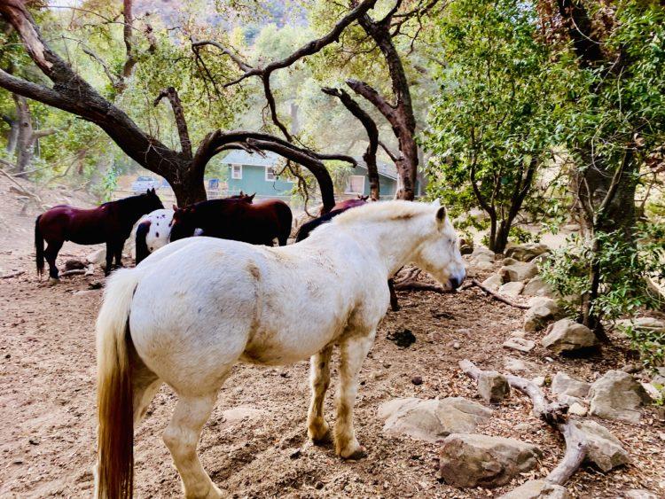 IMG 1894 Six Reasons to Visit Southern California's Circle Bar B Ranch and Guest Stables