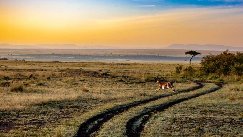 antelope 4121962 1280 Los 10 países más ricos de África (actualizado para 2020)