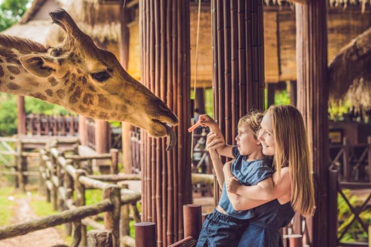 Zoológico de Amarillo