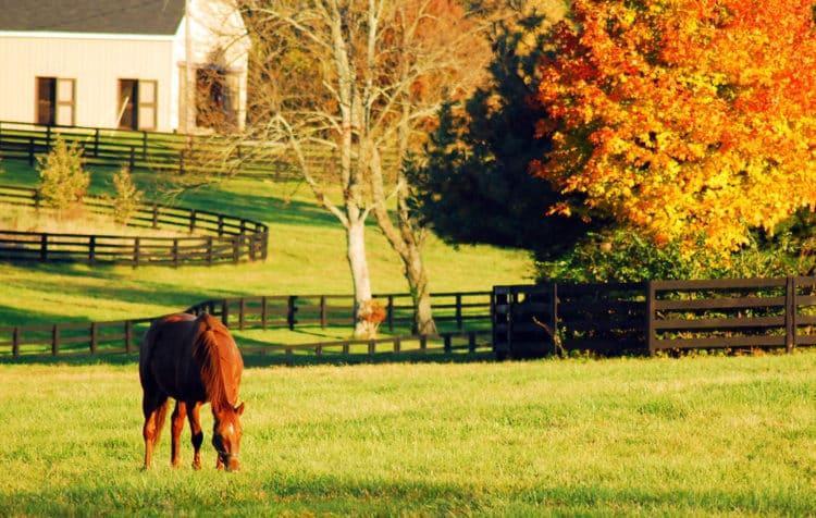 Parque Duncan, Kentucky