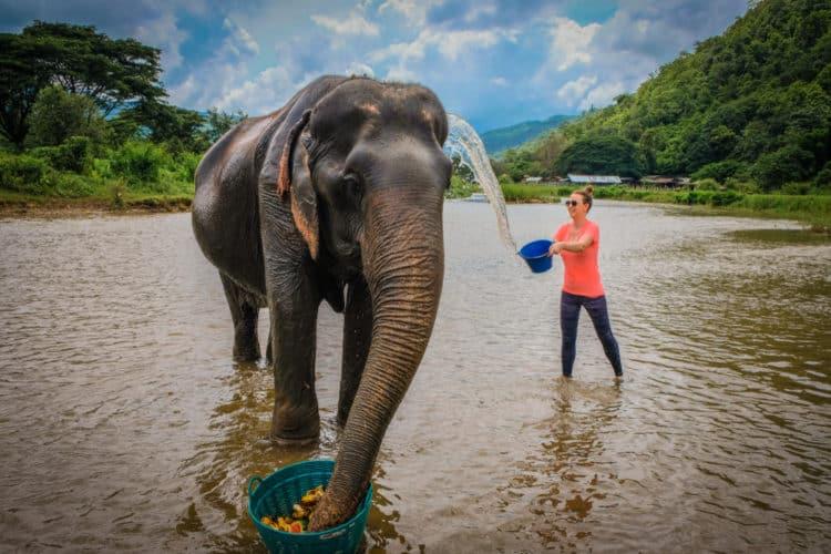 Santuario de la jungla de elefantes Chiang Mai