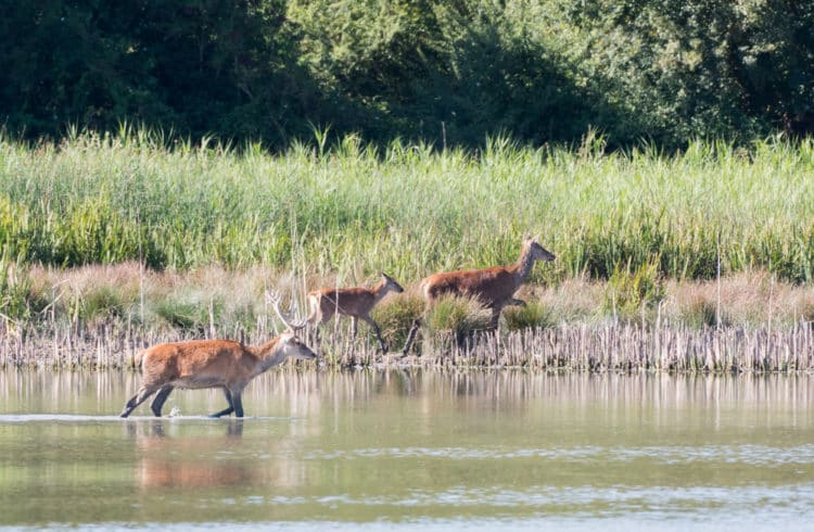 Parque de los ciervos de la laguna
