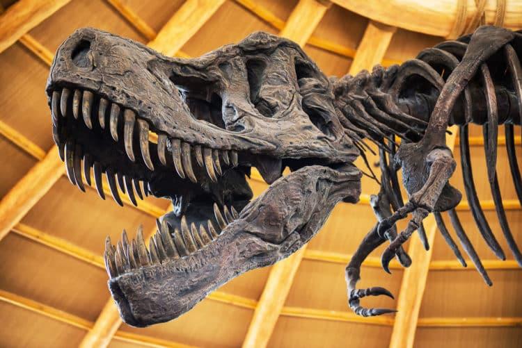 Museo de Historia Natural de Ozarks
