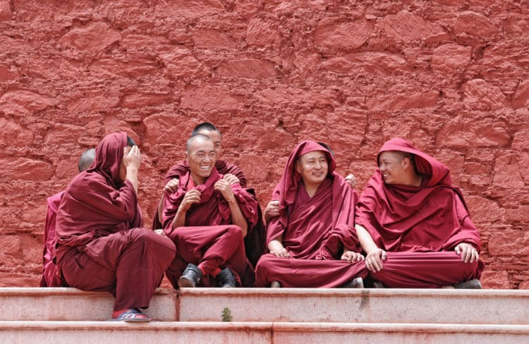 Chat de monje