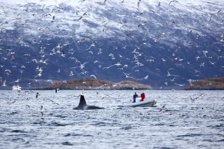 Safari en barco por el Ártico