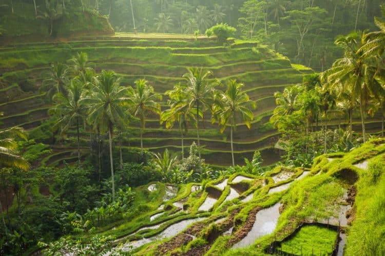 Terraza de arroz de Tegalalang