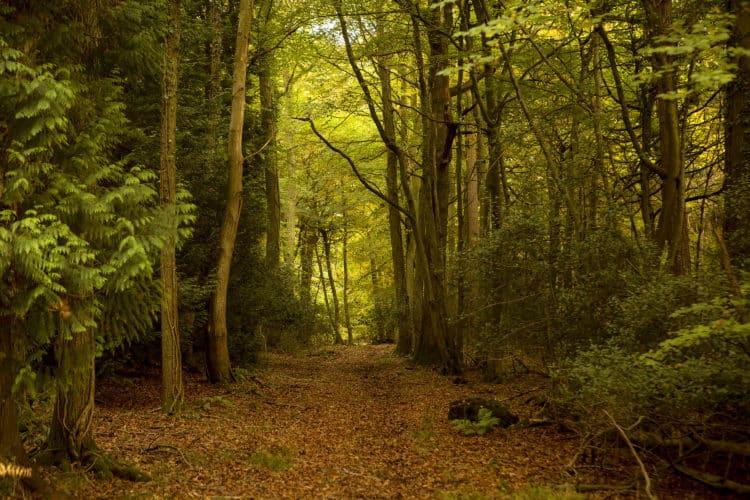 Dean Forest Park