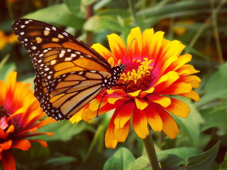Palacio de las Mariposas y Aventura en la Selva Tropical