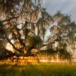 shutterstock 749751379 e1597414350728 Los 20 lugares más baratos para vivir en Florida