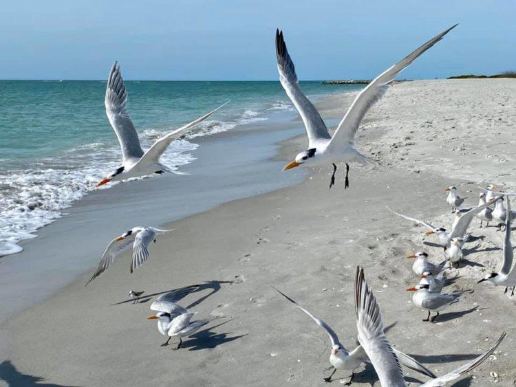 84696815 10163057164850471 3289359969895317504 n 10 razones por las que el South Seas Island Resort de Captiva Island es la escapada familiar perfecta en Florida
