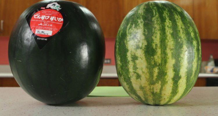 Sandía Densuke Las cinco frutas más caras del mundo