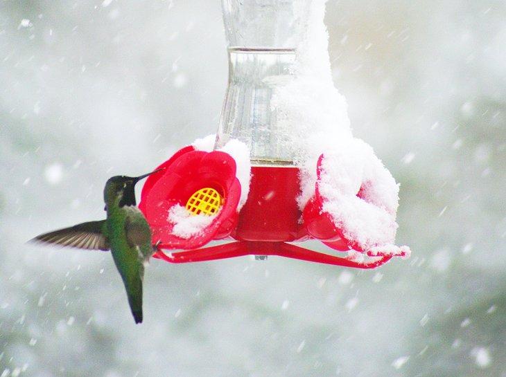 arizona best places to see snow sedona hummingbird at feeder 9 mejores lugares para ver la nieve en Arizona