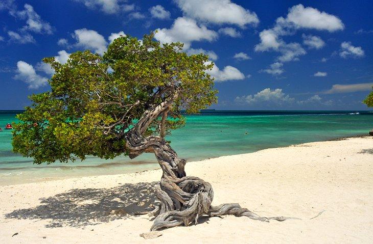 aruba beaches eagle beach 11 mejores playas de Aruba