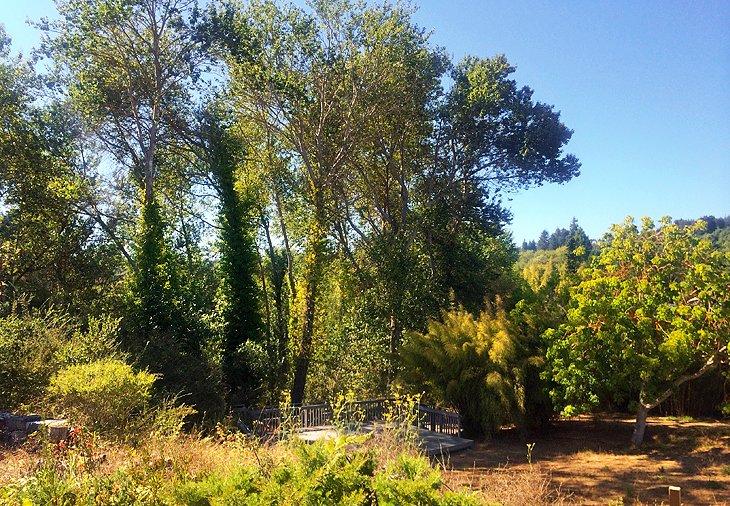 UC Santa Cruz Arboretum