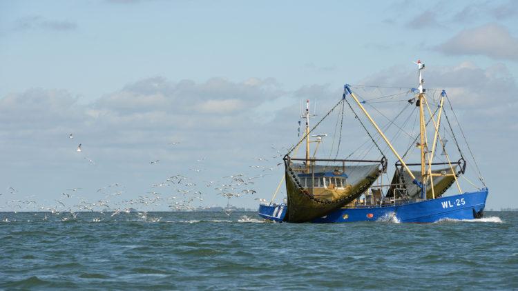 Haga un viaje en barco en el pez volador
