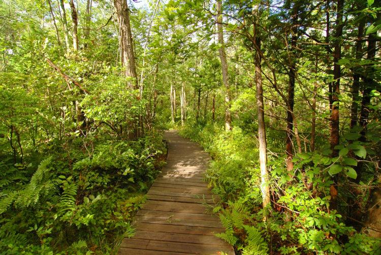 Centro de la naturaleza de Beaver Lake