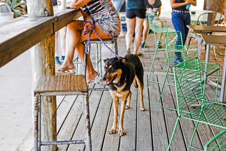 Perro en un café en Austin