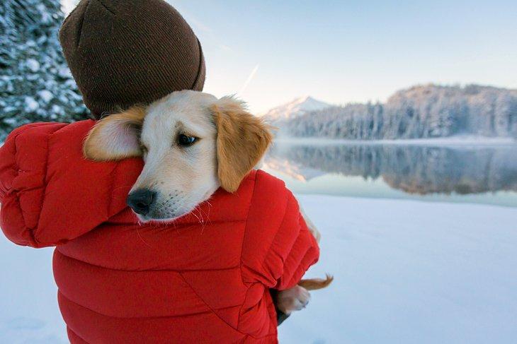 united states best dog friendly vacations bend oregon 10 mejores vacaciones para perros en los Estados Unidos