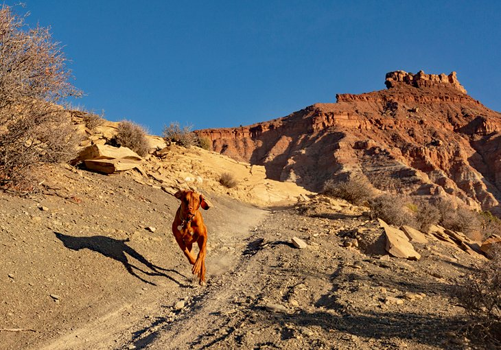 Perro feliz en un sendero en el sur de Utah