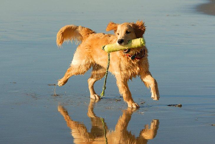 Dog Beach en Del Mar, CA