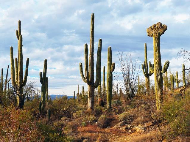 136C68DF F476 DEB0 BF68216ADB5B3322 Los cinco tipos de cactus más caros del mundo