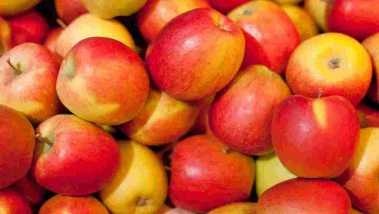 1391035274000 honeycrisp apple Los cinco tipos de manzanas más saludables que puedes comer