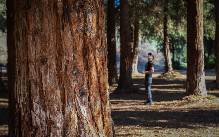Parque Regional Redwood