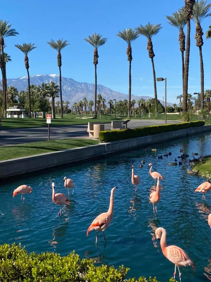 83028216 10162997028460471 8900221858599665664 n 10 razones por las que el JW Marriott Desert Springs Resort es divertido para toda la familia
