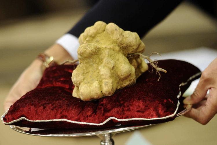Alba white truffle Las cinco trufas más caras de la historia