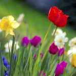 Colorful spring garden scaled e1581947107775 Las 20 peores ciudades para las alergias en los EE. UU.