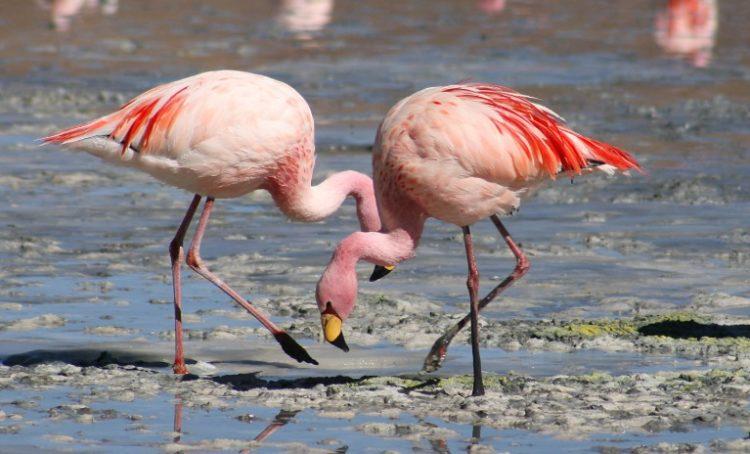 Flamingo Los 10 tipos de aves más caras del mundo