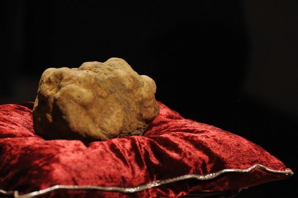 Italian white truffle 1 Las cinco trufas más caras de la historia