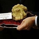 Italian white truffle Las cinco trufas más caras de la historia