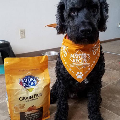 Nature's Recipe Farm Stand Selects Recipe 1 1 Los 10 alimentos para mascotas más caros del mercado actual
