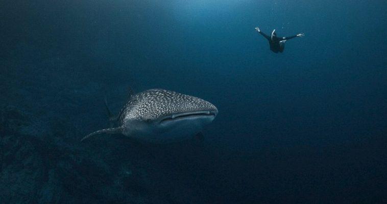 Swim Nadando en el lado superficial de la vida