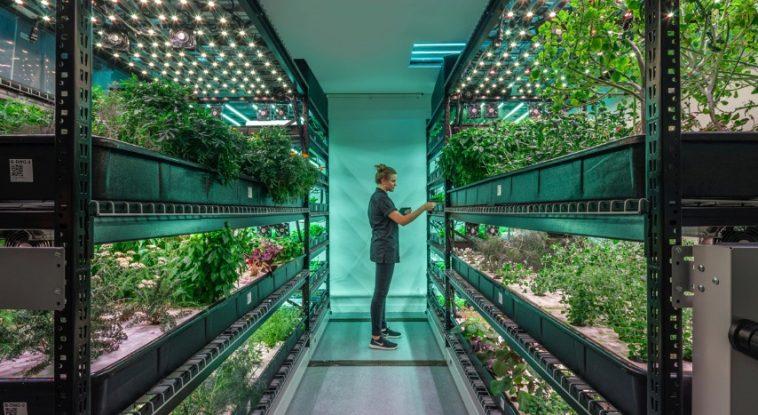 Vertical Farming ¿Qué avances hemos logrado en la agricultura vertical?