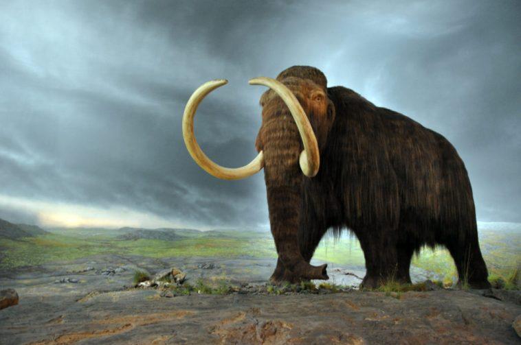 Woolly mammoth 1024x680 ¿Qué tan cerca está la de-extinción de convertirse en realidad?