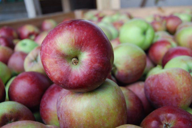 braeburn apples Los cinco tipos de manzanas más saludables que puedes comer