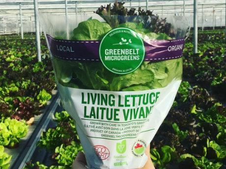 lettuce in sleeve Los cinco tipos de lechuga más saludables