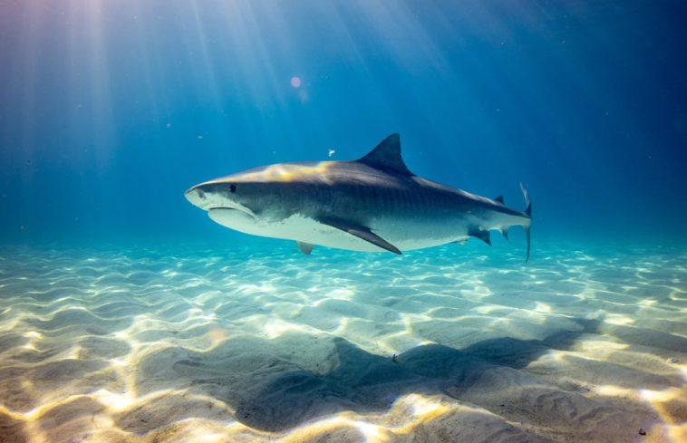 photo 1560275619 4662e36fa65c Los 20 animales salvajes más peligrosos del mundo