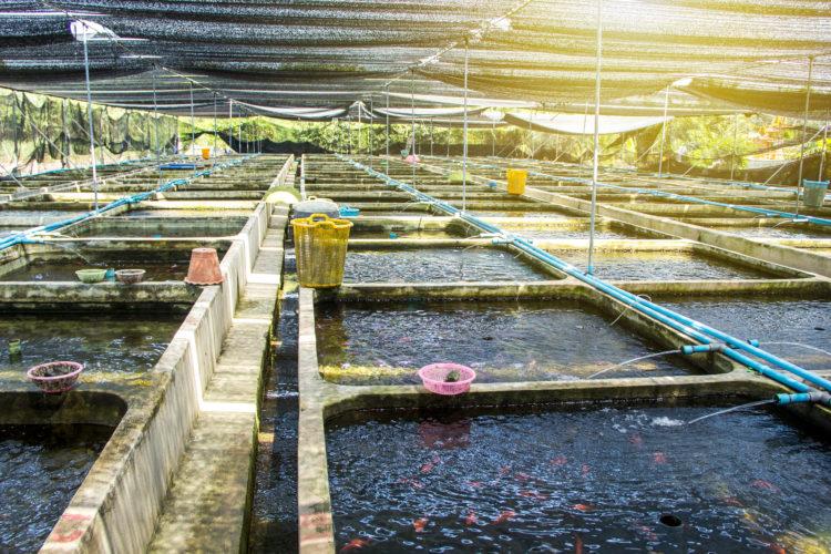 Estación Bow Habitat y criadero de peces Sam Livingston