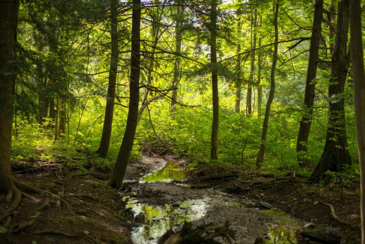 Centro de la naturaleza de Asbury Woods
