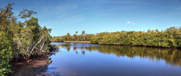 Senderos naturales en Bird Rookery Swamp