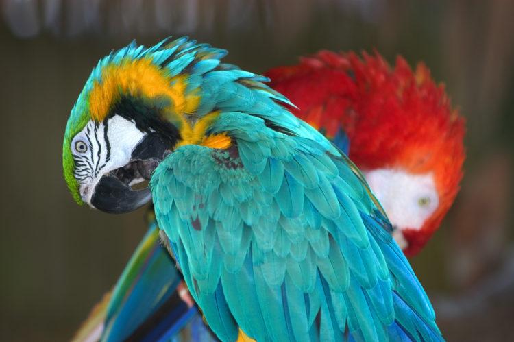 Zoológico de Nápoles en Caribbean Gardens