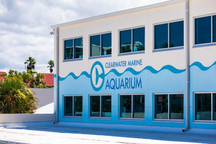 Acuario marino Clearwater
